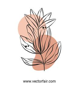 plant leaves foliage line art with colored spot