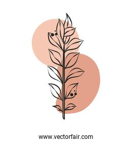 branch leaves foliage nature flora line art with colored spot