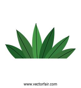 plant leaves foliage cartoon icon in isolated style