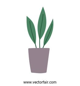 potted plant interior decoration cartoon flat isolated style