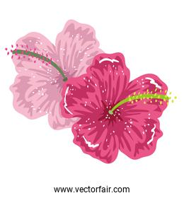 flower hibiscus exotic floral painting isolated design