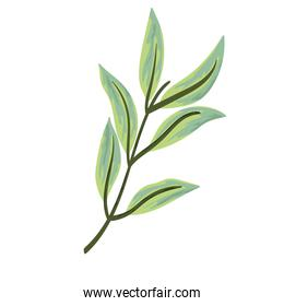 branch foliage nature decoration painting isolated design