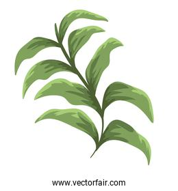 branch foliage plant nature decoration painting isolated design
