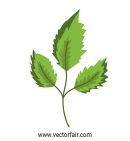 branch leaves foliage nature decoration painting isolated design