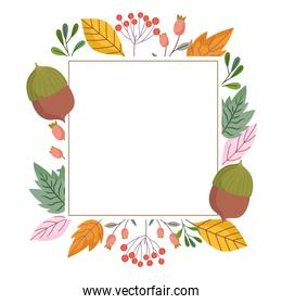 leaves foliage nature acorn branch nature decoration frame