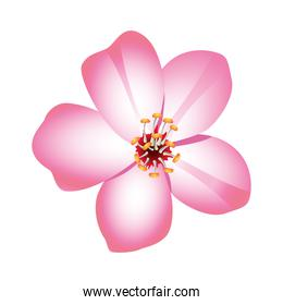 beauty pink flower nature icon