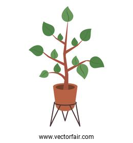 home plant in metal stand
