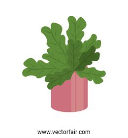 home plant in pink ceramic pot decor