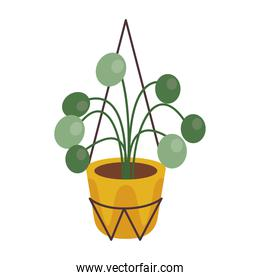 home plant in yellow ceramic pot decor in metal stand