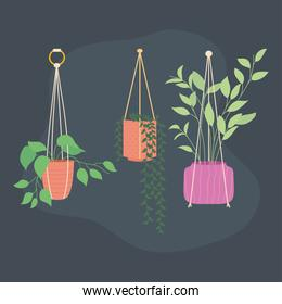 beautiful Plants in hanging pots icon, colorful design