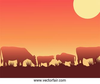 wild west sunset scene with cows in the camp