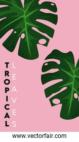 tropical leaves lettering poster with leafs in pink background