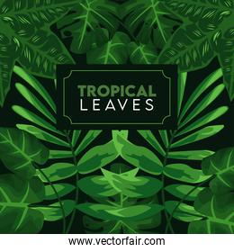 tropical leaves lettering poster with leafs in black background