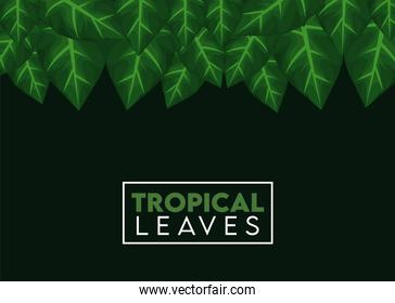 tropical leaves lettering poster with leafs square frame