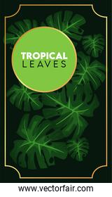 tropical leaves lettering poster with green circular frame in black background