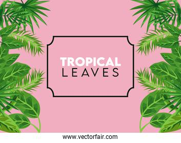 tropical leaves lettering poster with leafs in square frame in pink color background