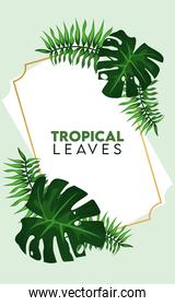 tropical leaves lettering poster with leafs palm in golden frame