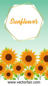 beautiful sunflowers garden with frame