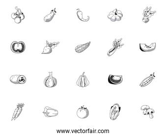 bundle of twenty vegetables set icons