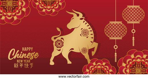 happy chinese new year card with golden ox and lamps in red background