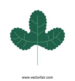 green color leave nature icon