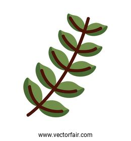 Plant leaf line and fill style icon vector design
