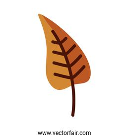 Natural leaf line and fill style icon vector design