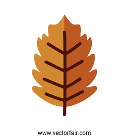 autumn season leaf line and fill style icon isolated vector design
