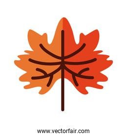 autumn maple leaf line and fill style icon vector design