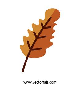 autumn season leaf line and fill style symbol isolated vector design
