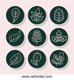 leaves line style icon set vector design