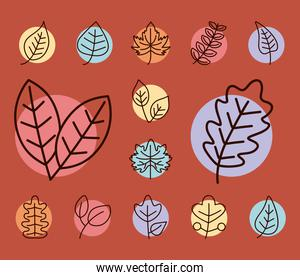leaves line style set of icons vector design