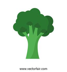 broccoli with a green color