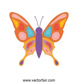 hand drawn butterfly with a different colors like purple and red