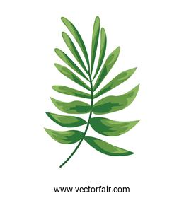 tropical leave plant green nature isolated icon
