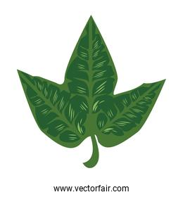 three leaves plants green nature icons