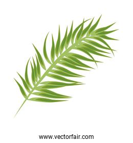 tropical leave palm green nature icon