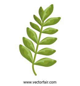 branch with leaves plants green nature isolated icons