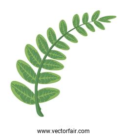 branch with leaves plants green nature icons