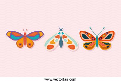 set of hand drawn butterflies on a pink background