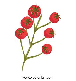 tomatoes in branch fresh vegetable health food icon white background