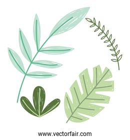 branches leaves foliage nature vegetation plant icons