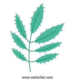branch nature leaves decoration cartoon icon isolated design