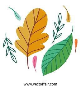leaves foliage ecological and nature foliage cartoon