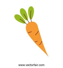 carrot vegetable healthy isolated icon