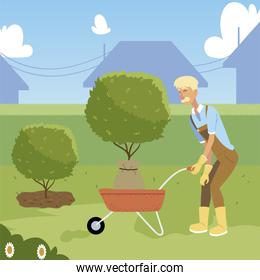gardening, old man gardener with wheelbarrow and tree for planting