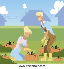 gardening, couple of farmers with harvest of big pumpkins vegetables cartoon