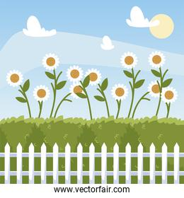 gardening, flowers daisies bushes and fence cartoon