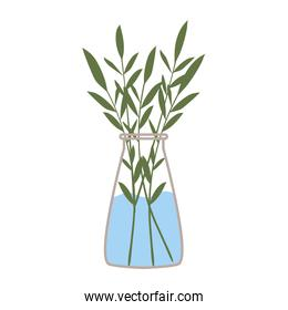 plant inside a vase with water