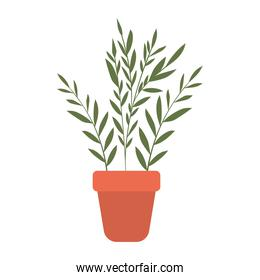 plant inside a pot with white background